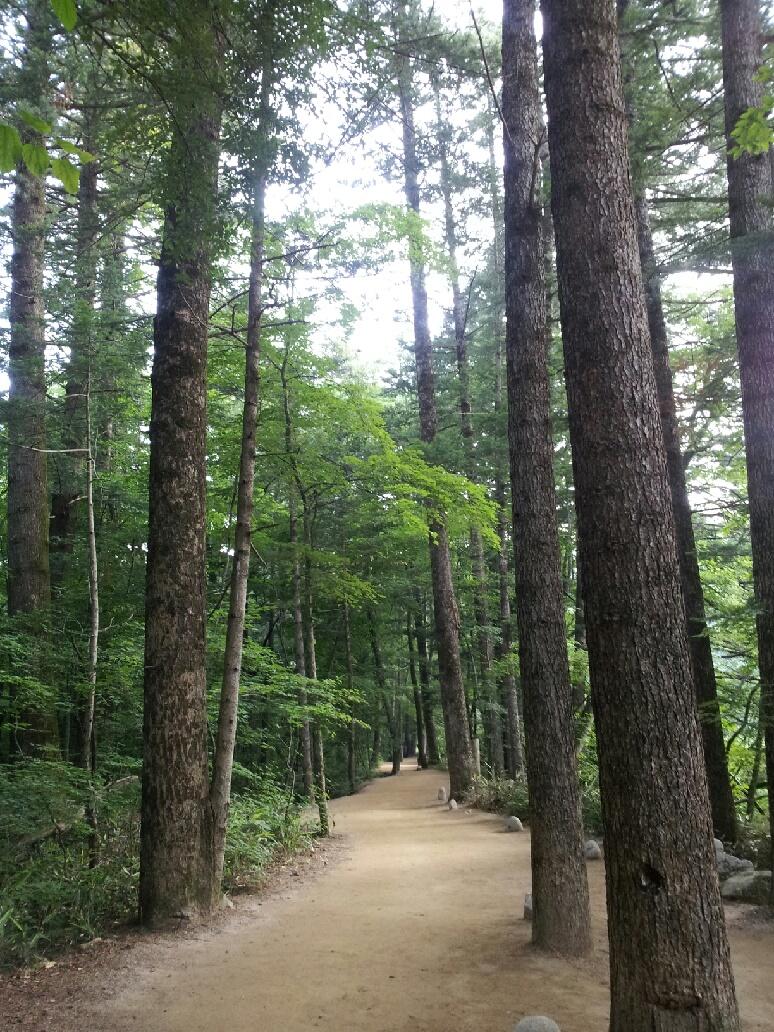 전나무숲.jpg