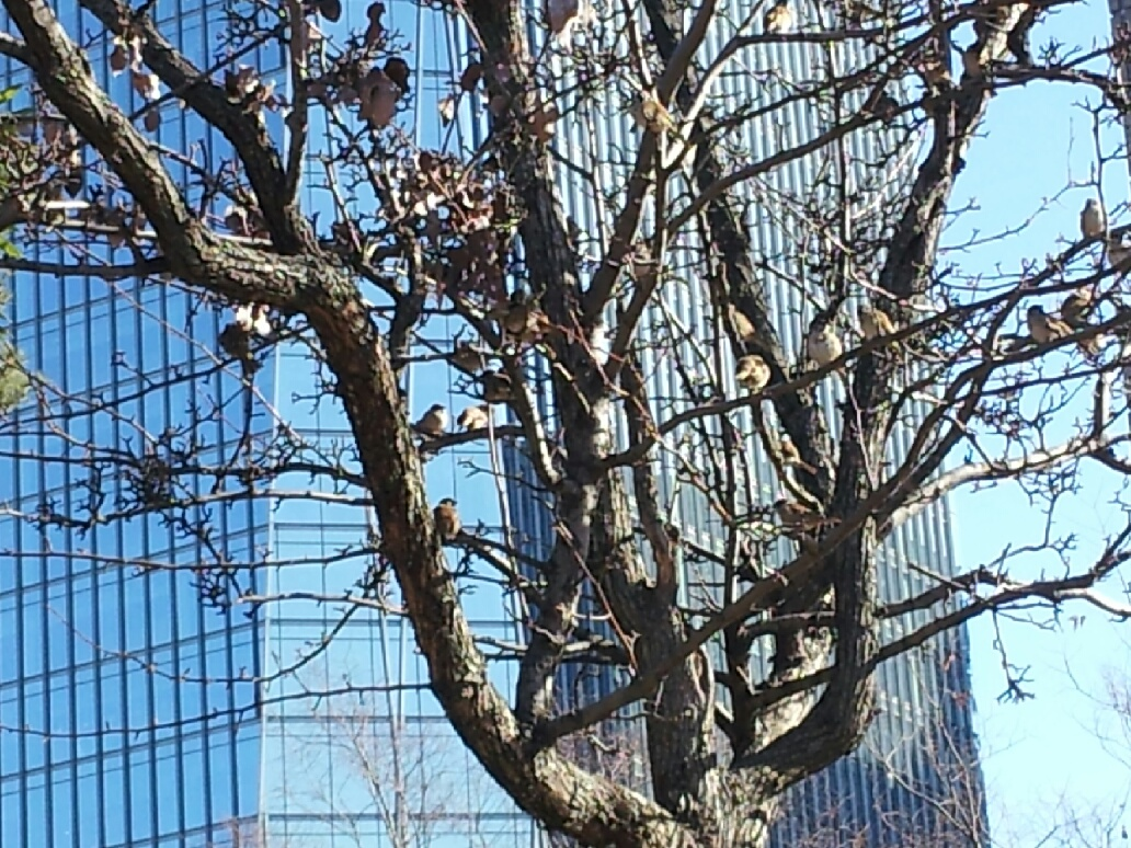 새가 주렁주렁 나무.jpg